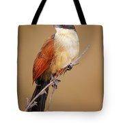 Burchell's Coucal - Rainbird Tote Bag