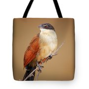Burchell's Coucal - Rainbird Tote Bag