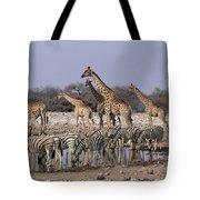 Burchells Zebra Equus Burchellii Tote Bag