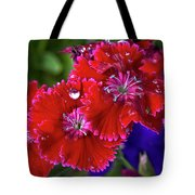 Burgandy Red Dianthus Tote Bag