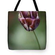 Burgandy Striped Tulip 2 Tote Bag