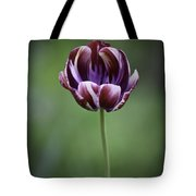 Burgandy Striped Tulip 3 Tote Bag
