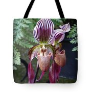 Burgundy Orchids With Stripes Tote Bag