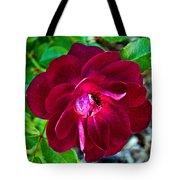 Burgundy Red Rose At Pilgrim Place In Claremont-california  Tote Bag