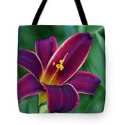 Burgundy Wine Red Daylily Tote Bag
