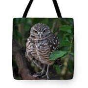 Burrowing Owl Color Version Tote Bag