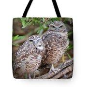 Burrowing Owl Pair  Tote Bag