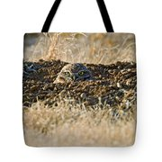 Burrowing Owl Peaking Outta The Hole  Tote Bag
