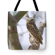 Burrowing Owl Perched On A Branch  Tote Bag
