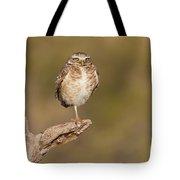 Burrowing Owl Taking A Break Tote Bag