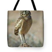 Burrowing Owlet-img_1414-2017 Tote Bag