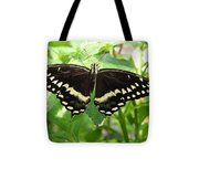 Butterflies Live - 8 Tote Bag