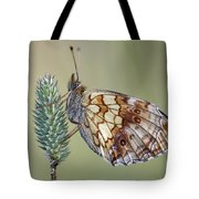 Butterfly - Meadow Satyrid Tote Bag
