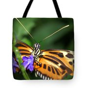Butterfly 2 Eucides Isabella Tote Bag