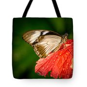 Butterfly 24 Tote Bag