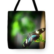 Butterfly At Cleveland Botanical Gardens Tote Bag