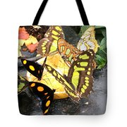 Butterfly Feast  Tote Bag