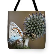 butterfly on a Echinops adenocaulon Tote Bag