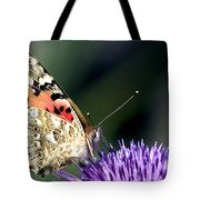 butterfly on a Silybum marianum I Tote Bag