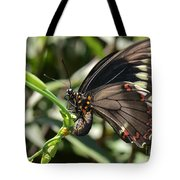 Butterfly Surprises Tote Bag
