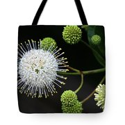 Buttonbush Flowers Tote Bag