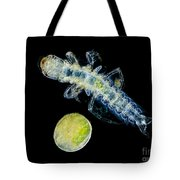 Caddisfly Larvae And Egg, Lm Tote Bag