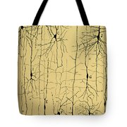 Cajal Drawing Of Microscopic Structure Of The Brain 1904 Tote Bag