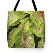Caladium Leaves Tote Bag
