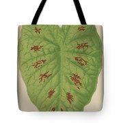Caladium Verschaffelti Tote Bag