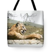 California Cougar Tote Bag