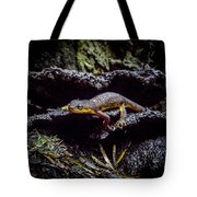 California Newt  Tote Bag
