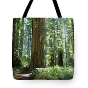 California Redwood Forest Trees Art Prints Tote Bag