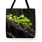 California Redwoods 4 Tote Bag