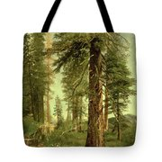 California Redwoods Tote Bag