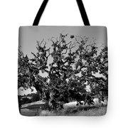 California Roadside Tree - Black And White Tote Bag