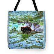 California Sea Lion-1611 Tote Bag