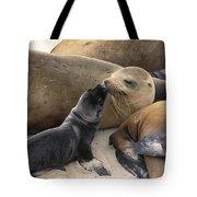 California Sea Lion And Newborn Pup San Tote Bag by Suzi Eszterhas
