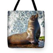California Sea Lion At La Jolla Cove Tote Bag by Sam Antonio Photography