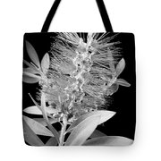 Callistemon Beauty 4 Tote Bag