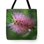 Callistemon Viminalis Taree Pink Weeping Bottlebrush Flowering Trees Of Hawaii Tote Bag