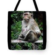 Cambodia Monkeys 3 Tote Bag