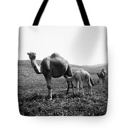 Camel And Young Tote Bag