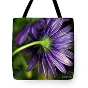Camera Shy Daisy Tote Bag