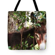 Camera Shy Donkey Tote Bag