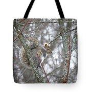 Camera Shy Grey Squirrel Tote Bag