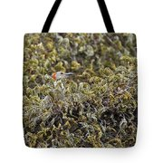 Camouflaged Red-bellied Woodpecker Tote Bag