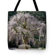 Camperdown Elm Tree Tote Bag