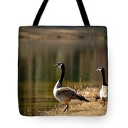 Canada Geese In Golden Sunlight Tote Bag