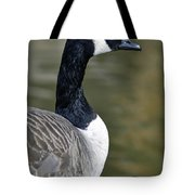 Canada Goose Portrait Tote Bag