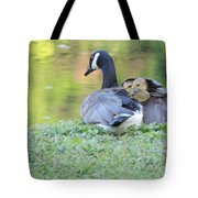 Canadian Goose Mother And Babies Tote Bag